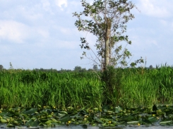 swamp10