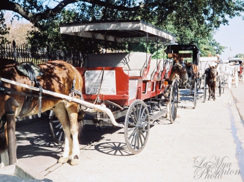 Mule-drawn carriages on Decatur st.